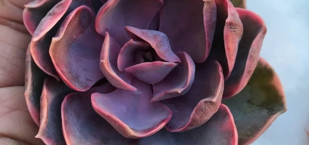 How to Customize Your Succulent and Cactus Soil To Improve Drainage?