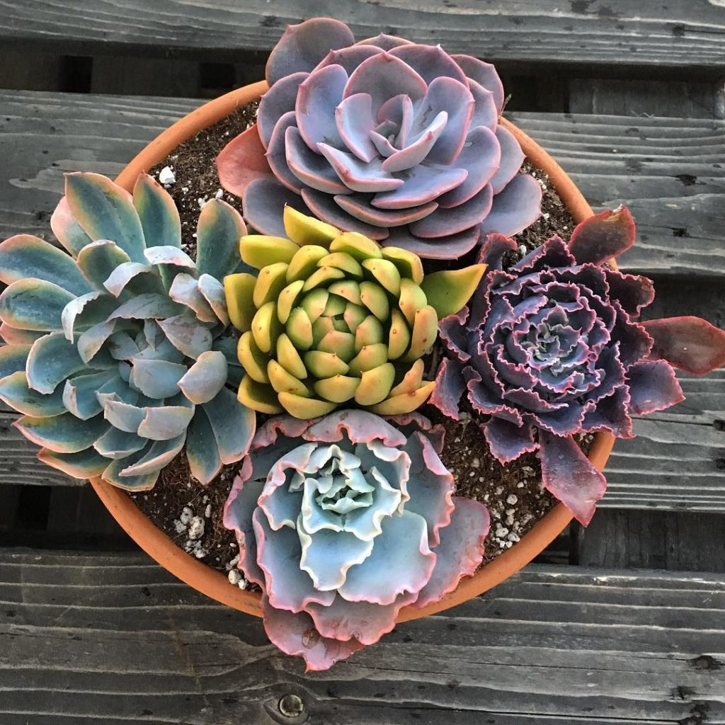 Why Succulents need Water Therapy?