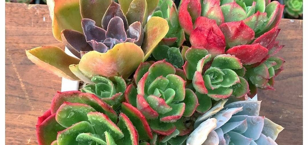 Tips To Save A Dying Succulent