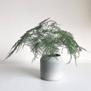 What House Plants Are Poisonous to Cats And Dogs - Asparagus Fern