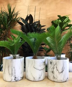 What House Plants Are Poisonous to Cats And Dogs - Sago Palm