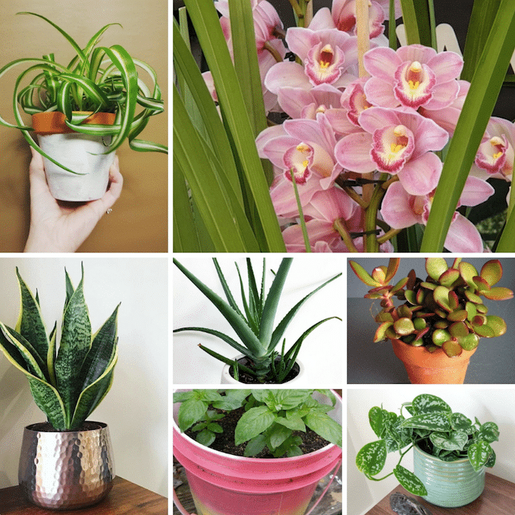 7 Feng Shui Plants You Should Know