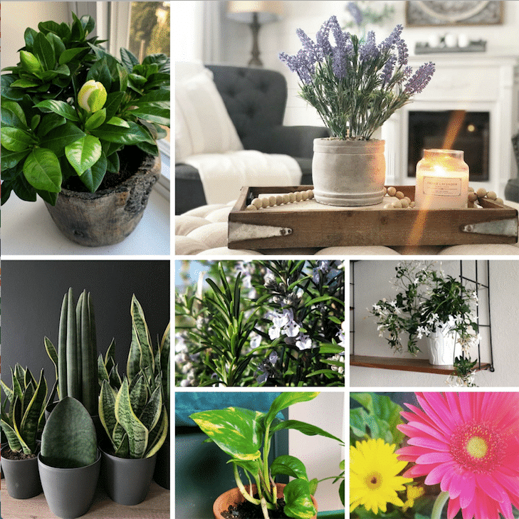 Houseplants For Bedroom To Improve Sleep