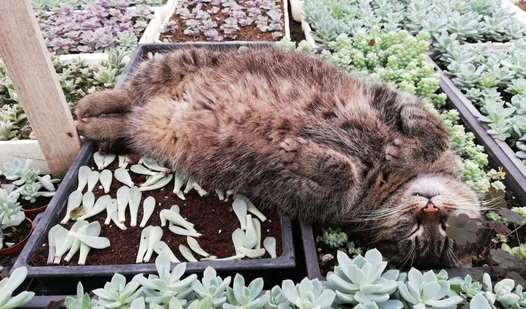 What House Plants Are Poisonous to Cats And Dogs