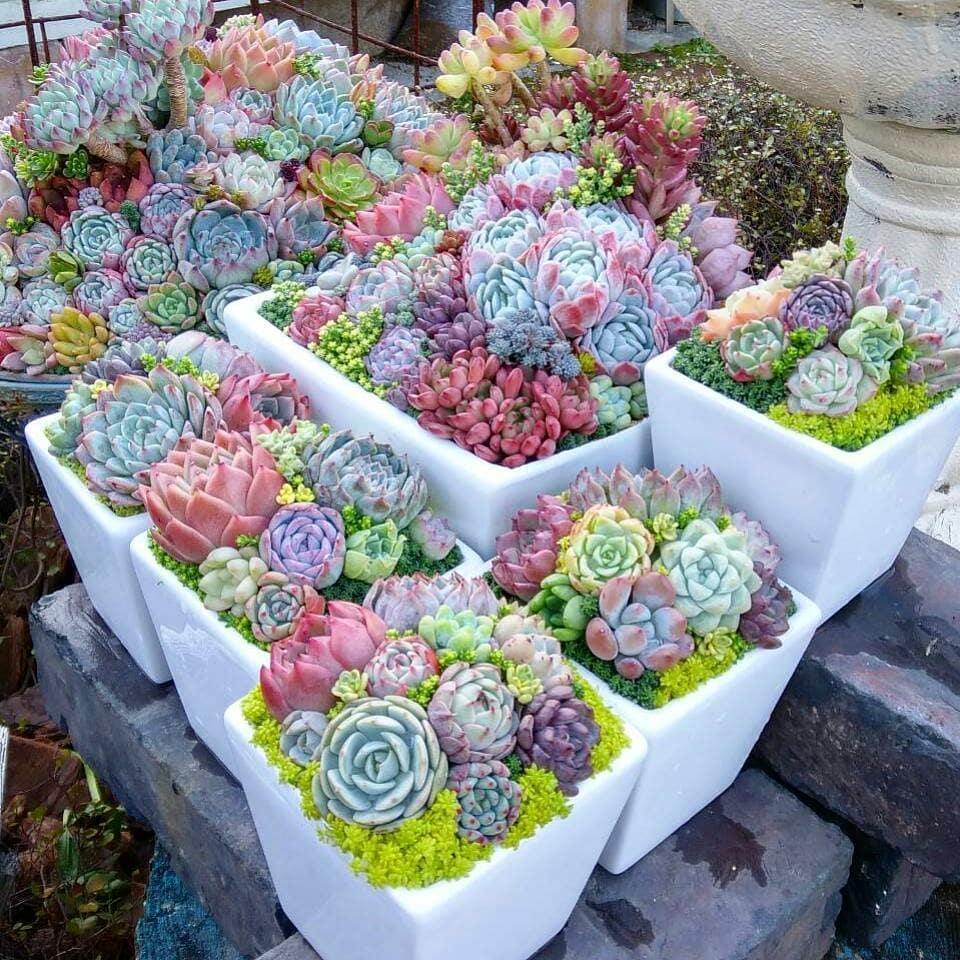 Why Watering Succulents Is Important