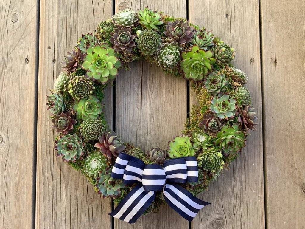 Succulent Wreath For Beginners