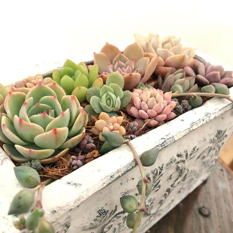 What are some of the awesome succulent plants?