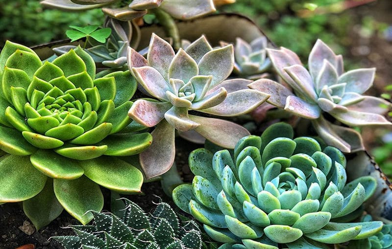 What care requirements a succulent need?