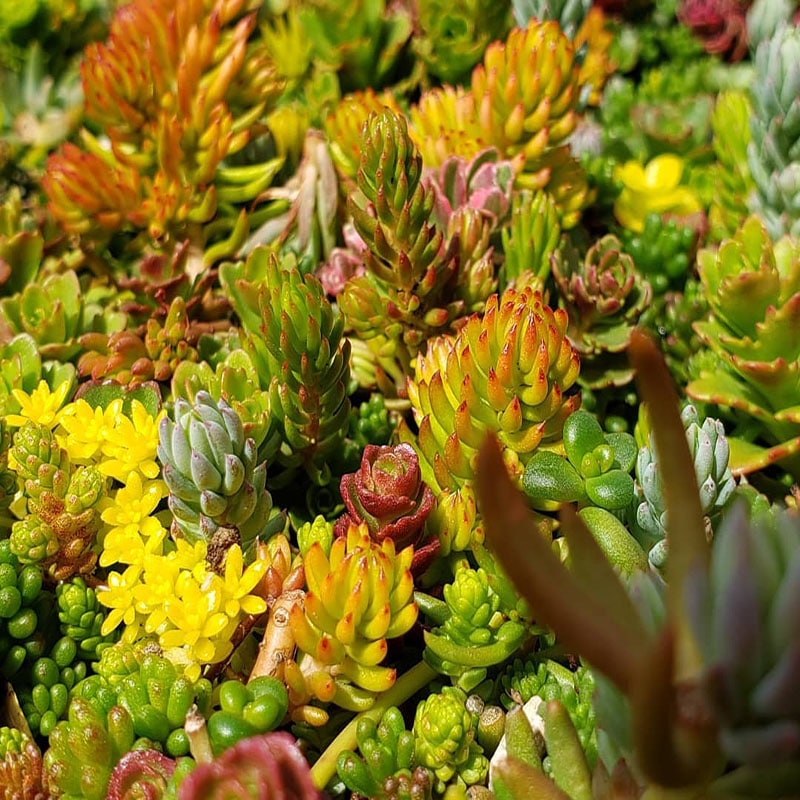 Why people are obsessed with succulents?
