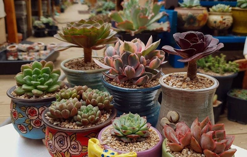 Important factors for growing succulents